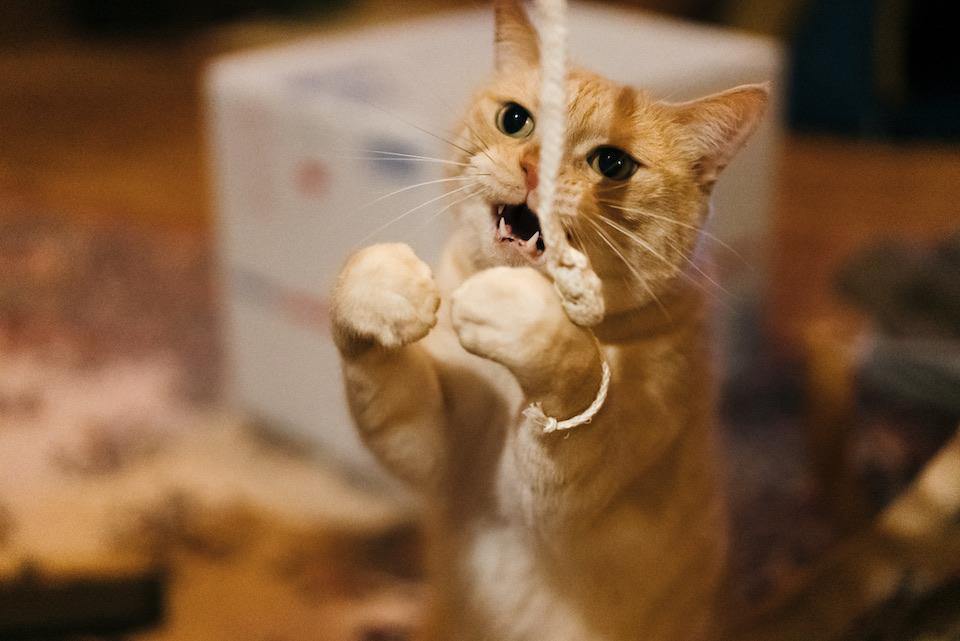 ぼく、キャッチ得意なんだよ。せーの、えいっ! ……あれ?