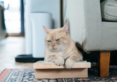 ふきげんな猫、ぶんぶん日記。 vol.15 メランコリーな日もある。