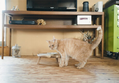 ふきげんな猫、ぶんぶん日記。 vol.16 育ち盛りなんですけど。