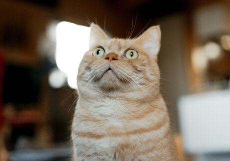 ふきげんな猫、ぶんぶん日記。 vol.17 忘れてた!