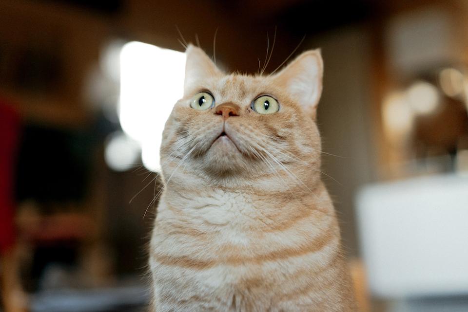 あっ! 猫番組の録画し忘れた!