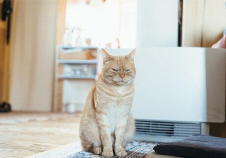 ふきげんな猫、ぶんぶん日記。 vol.18 今日もふきげんなのである。