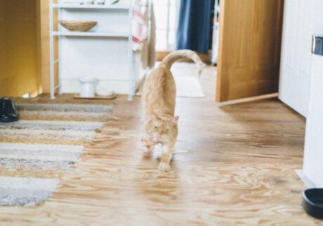 ふきげんな猫、ぶんぶん日記。 vol.19 たまにはおねだりでもするか。