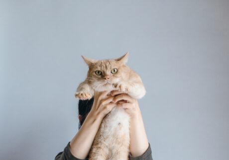 ふきげんな猫、ぶんぶん日記。 vol.20 え、太った?
