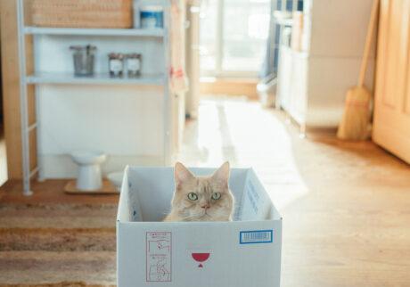 ふきげんな猫、ぶんぶん日記。 vol.23 だって、箱があったから。