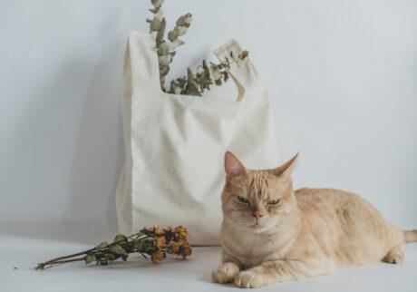 ふきげんな猫、ぶんぶん日記。 vol.25 まだ撮影するの?
