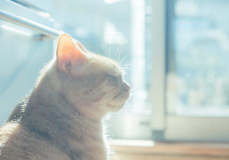 ふきげんな猫、ぶんぶん日記。 vol.26 願いごと。