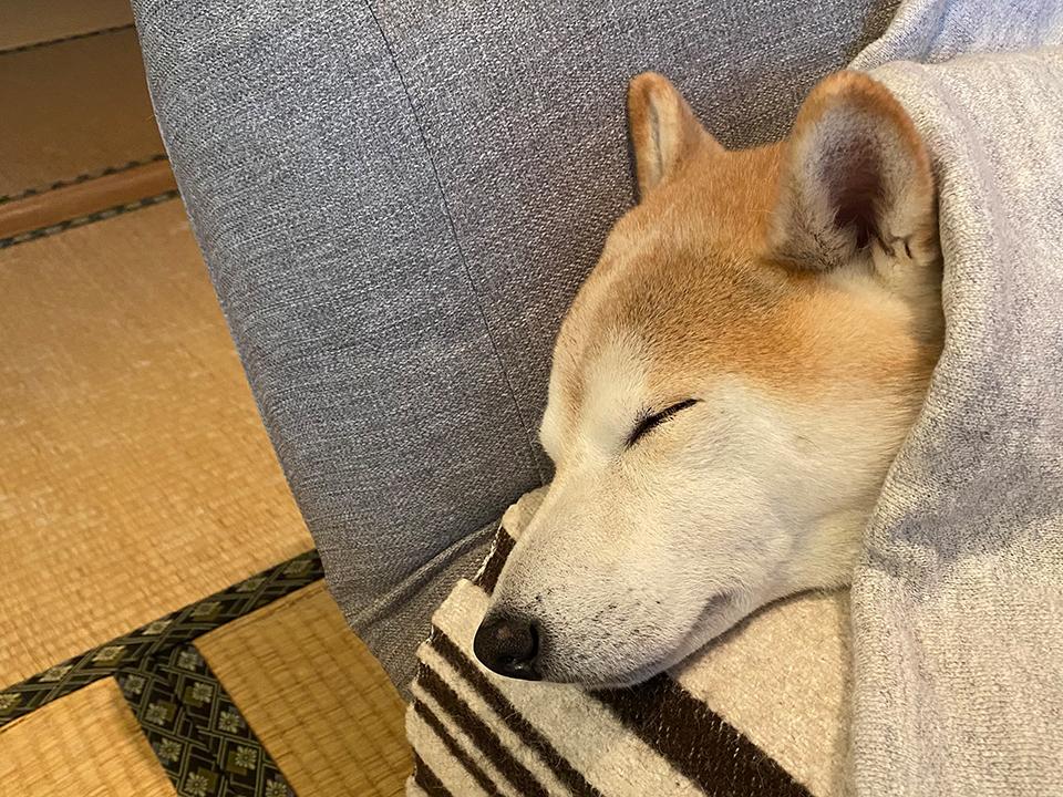 sleep_newyear_moku02
