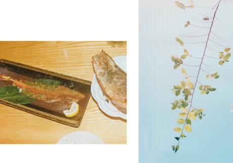 今月の写真家、今日の一枚。伊藤 明日香 vol.12