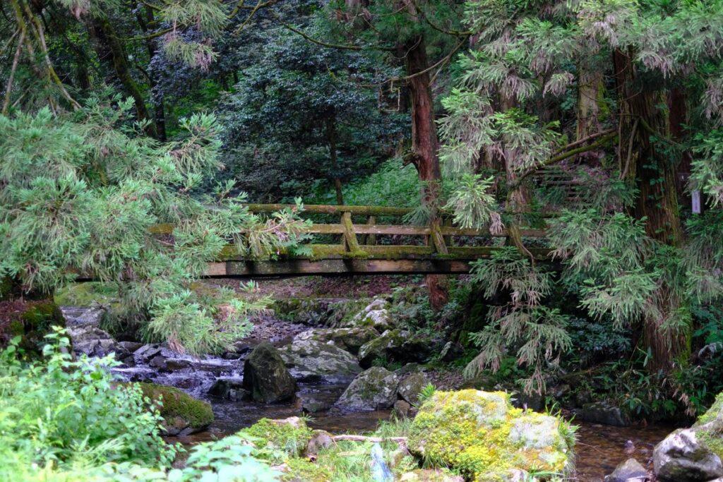 龍頭が滝までの道のり。道のそばの清流には天然記念物のオオサンショウウオが生息しているのだとか。