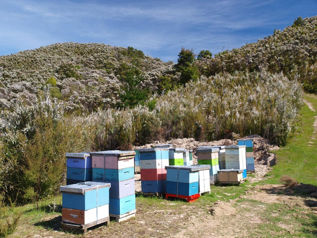 マヌカヘルス社は45か国で愛されるニュージーランド最大級のマヌカハニーブランド。2万個の自社巣箱を持ち、巣箱から製品に至るまで追跡管理が可能。南半球の自然が育んだ高品質なマヌカハニーを毎日の習慣に。
