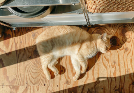 ふきげんな猫、ぶんぶん日記。vol.12寝言。