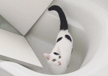もちベルのときどきシンクロシスターズ 。vol.15 お風呂好き!?
