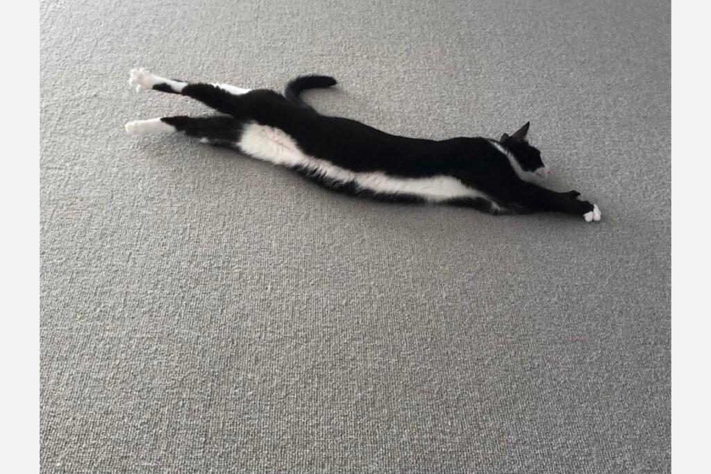 ベルカ「ジャンプの練習を寝ながらやってみました。楽です」