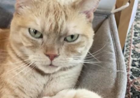 ふきげんな猫、ぶんぶん日記。 vol.6 僕の身だしなみ。