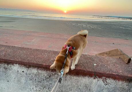 シバイヌ モクのベターな日々。朝日が昇るよ〜。