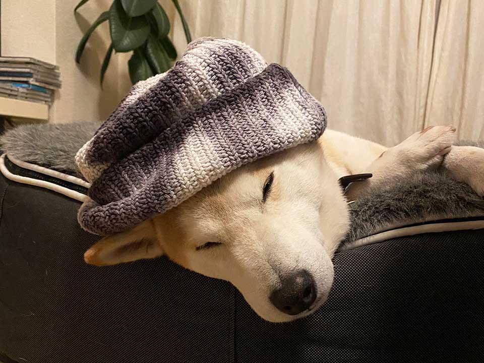 新しいお帽子。