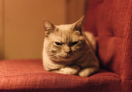 ふきげんな猫、ぶんぶん日記。 vol.29 ふきげんですけど、なにか?