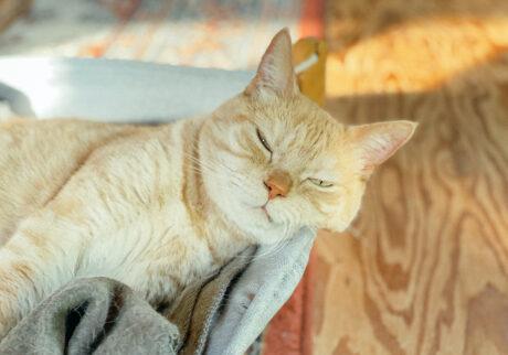 ふきげんな猫、ぶんぶん日記。 vol.32 ウトウトしてませんから。