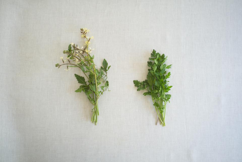 左/ルッコラ<p> 地中海沿岸原産の一年草。発芽率も高く、初心者にも育てやすいハーブです。 辛味と苦味を持った味わいで、料理やお菓子のスパイスとしての存在感も十分。鮮やかな緑には「クロロフィル」と呼ばれる天然の色素が入っていて、免疫力を高める成分といわれています。βカロテン、ビタミンCなどビタミン類が豊富で、風邪の予防や疲労回復も期待できます。 </p><p></p> 右/イタリアンパセリ<p> ヨーロッパ地中海原産のセリ科の二年草。 「パセリ」と呼ばれているものに比べ、風味や香りは柔らかいのが特徴です。また、ハーブの中でもさまざまな栄養素が豊富。ビタミンKを多く含んでおり、カルシウムを骨に定着させるための働きや、血液を凝固させるための成分の合成に関わっています。鉄分の含有量も 多く、貧血が気になる人は、積極的にサラダやパスタなど料理に使ってみても。 </p>