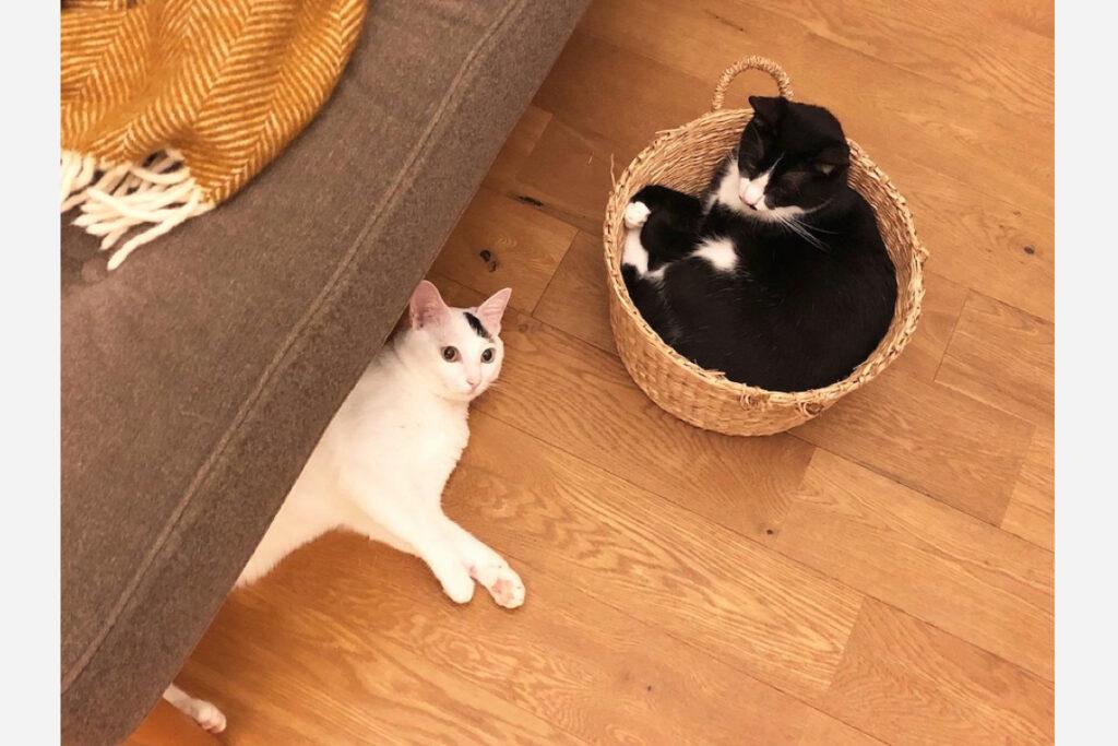 ベルカ「ずっといてもいいくらい、カゴの中が好きなの。落ち着くー」 おもち「ネコって、すぐカゴに入りたがるらしいね。私はそんなに興味ないけど」 ベルカ(おもちもネコですよ……)