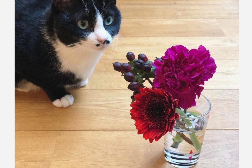ベルカ「お花は食べられないってほんと? そんなに興味はないですが、念のため、クンクンします」