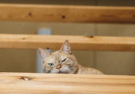 ふきげんな猫、ぶんぶん日記。 vol.34 透視術。
