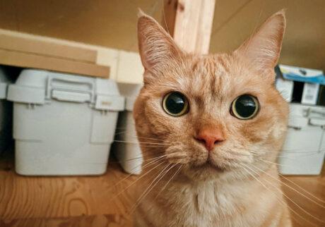 ふきげんな猫、ぶんぶん日記。 vol.33 顔の使い分け。