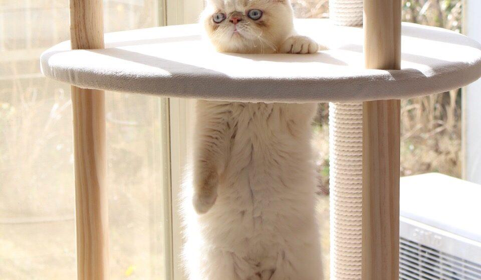ねこのテンちゃんだよ。これからテンちゃんの連載がはじまるのよー。ちなみにこれはUFOに囚われた猫じゃなくて、お気に入りのキャットタワーです(不満顔だからいろいろ誤解されて困ります)。この穴から覗く景色は、格別なのよ。ねこの特権だね!