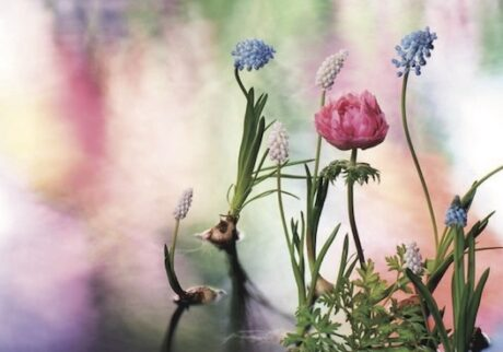 華道家・片桐功敦が作り上げた、花とジュエリーが融合した世界。