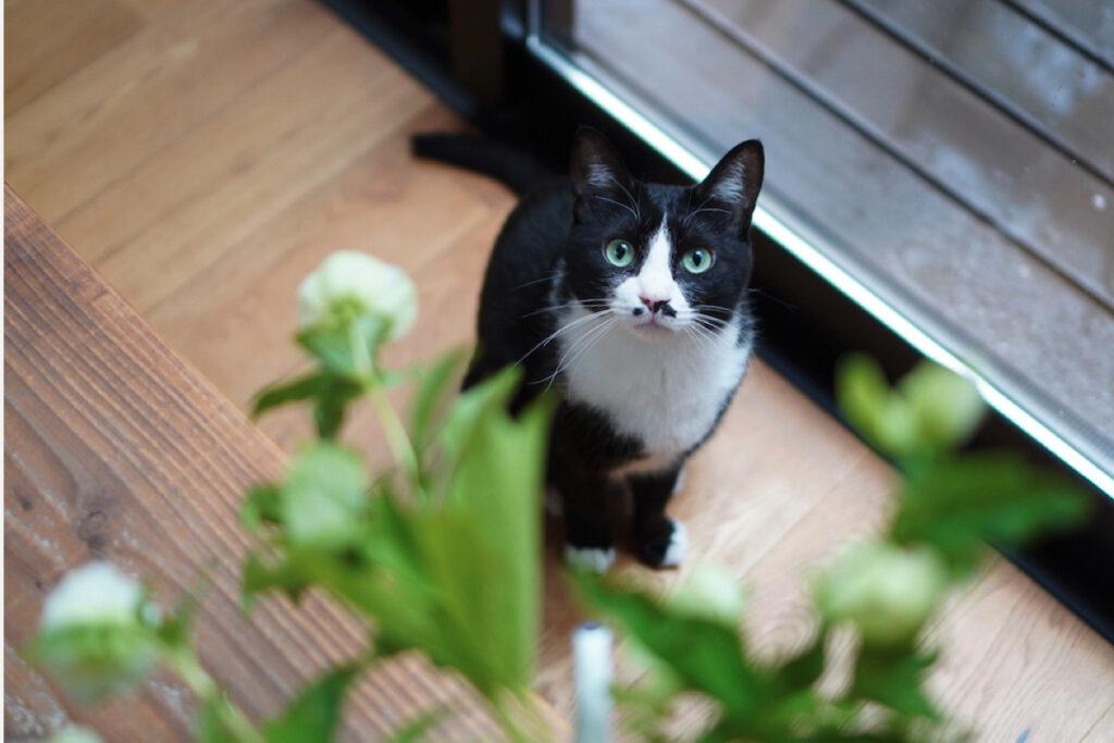 ベルカ「おかあちゃんがたまにお庭から持ってくるお花、いいにおいするから気になってます」