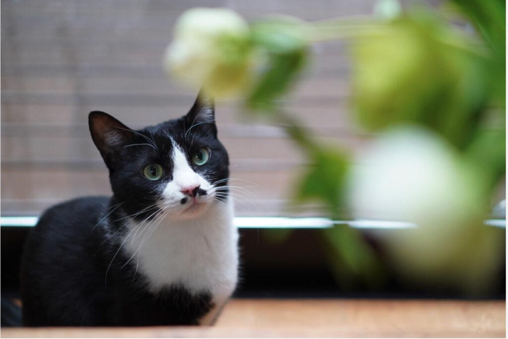 ベルカ「食べさせてくれないかしら。ネコ草の仲間じゃないのかしら」