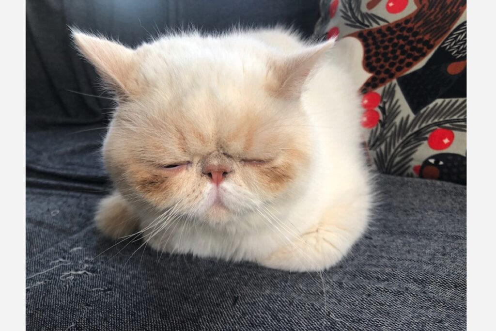 きっとこんな顔だろうな……。なんて、考えてたら眠くなってきた。