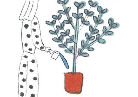 緑を育てるときにやらかしがちな、8つのこと。