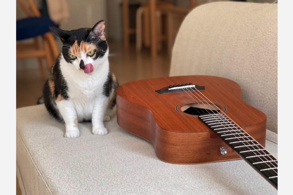 ギターを弾くときにだって、おやつがあれば全力でがんばれそうなんですけど。