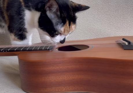 ギター弾きの富士子日記 。vol.10 ギターの中には何がある?