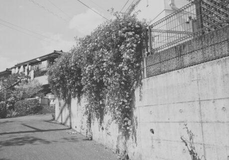 今月の写真家、今日の一枚。芝山 健太 vol.12