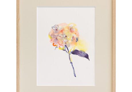 「紫陽花」 紙、水彩 撮影:稲口俊太