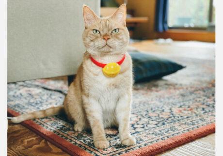 ぼくの得意な変身を披露するよ。まずは猫型ロボット〜。