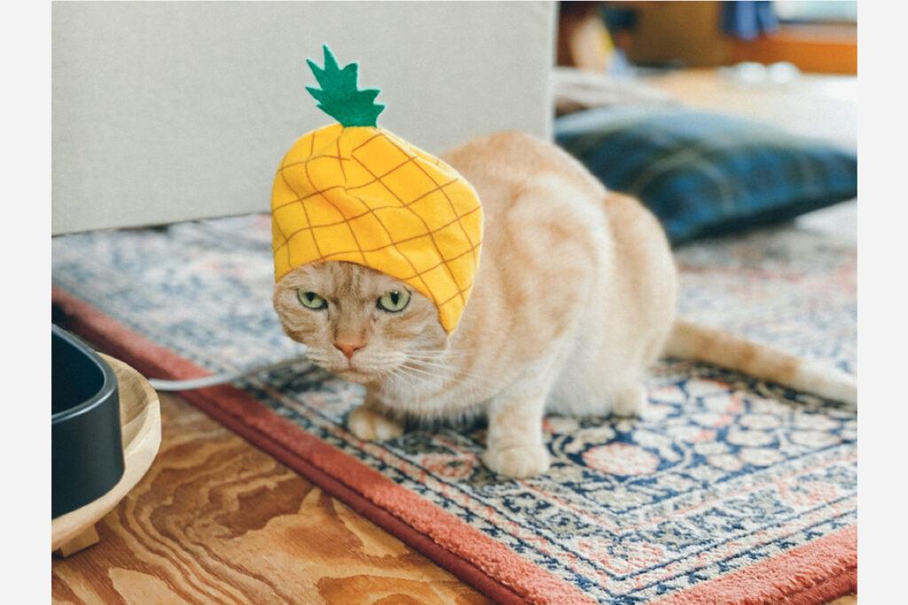最後にパイナップル。……って、ぼくパイナップルは苦手だし、パイナップルに変身って、意味わかんないんですけど。