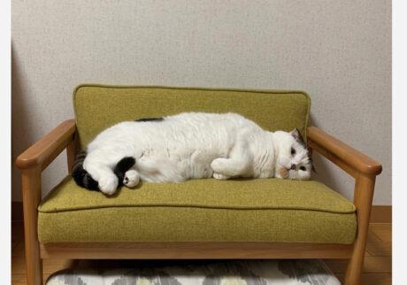 オレ専用のソファ。ジャストフィットやろ。