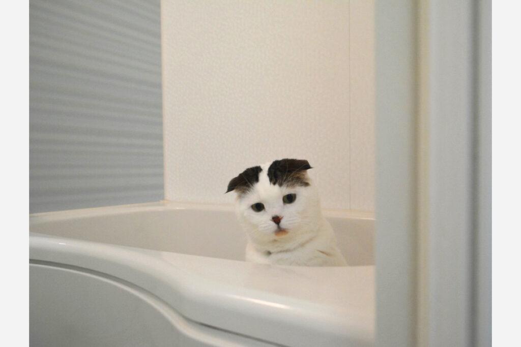 シャワー出したら、猫パンチお見舞いしたるからな!