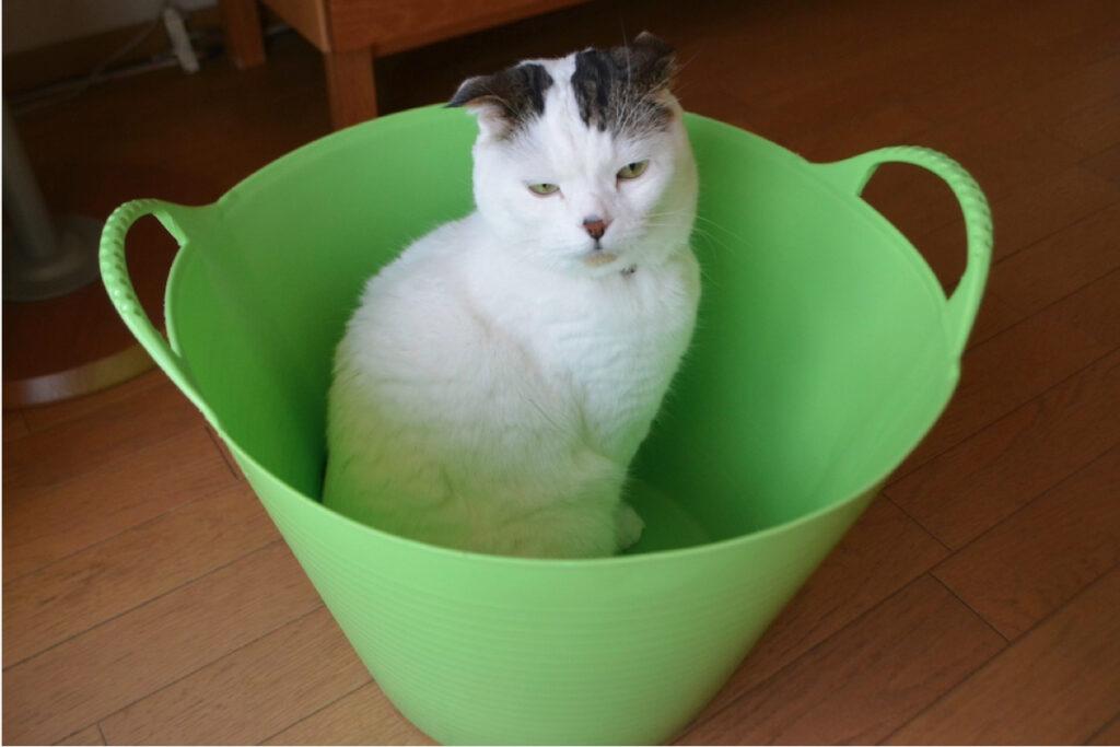 洗濯物入れるからどいてって!? いやや〜。