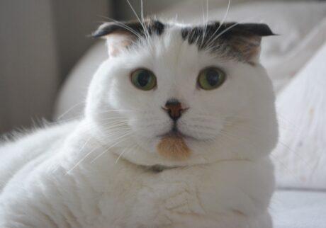 """1か月間、見てくれてありがとう! これからは週に1回、""""水曜日のネコ""""として登場するで。ほな、またなー!"""