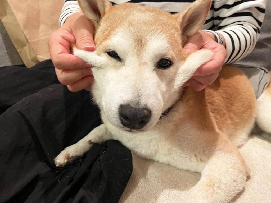 ムニムニ好き モク 芝犬