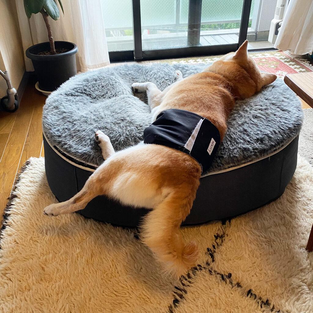 こぼれ方三分の一 モク 芝犬