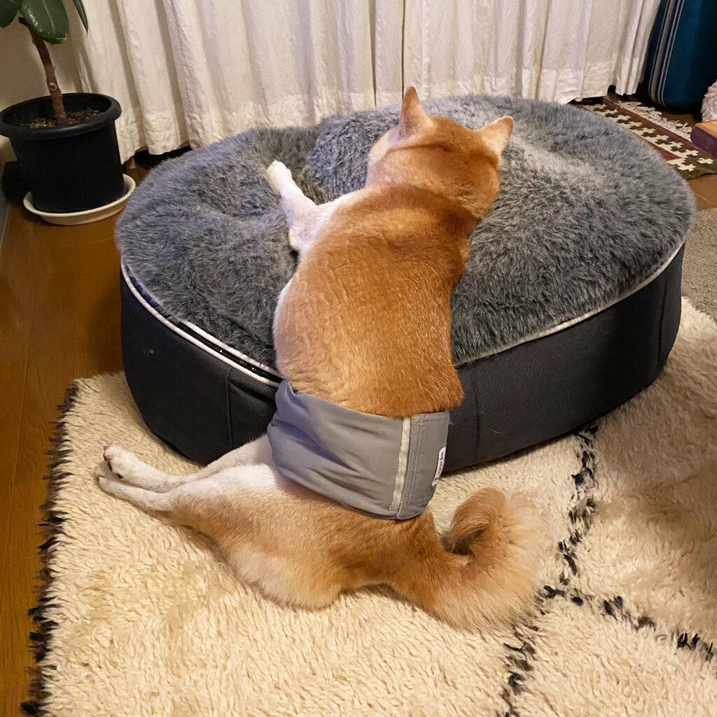 こぼれ方二分の一 芝犬 モク クッション