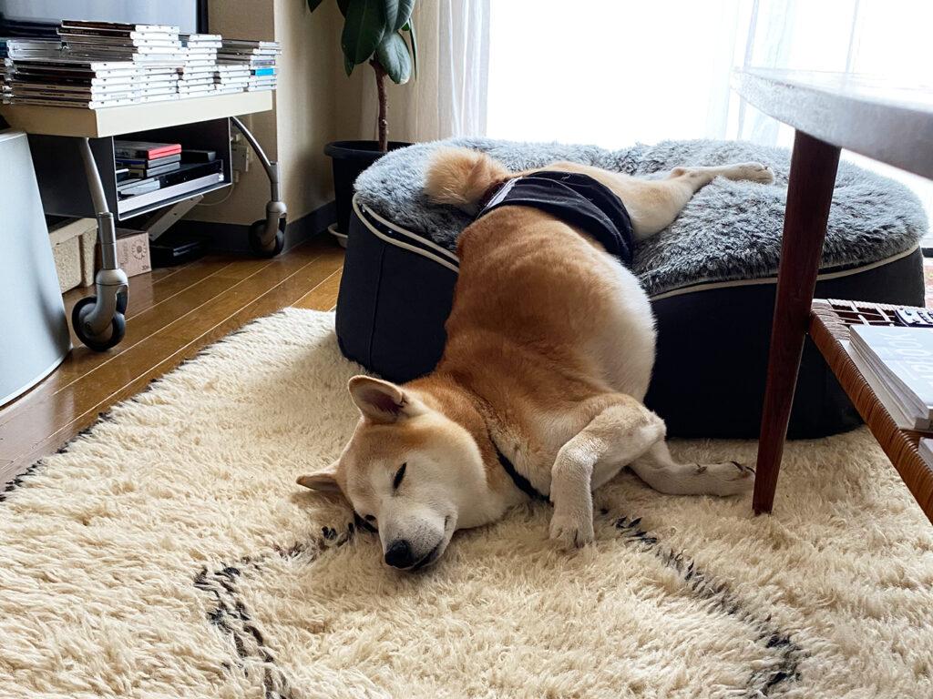 モクのゲル化 芝犬