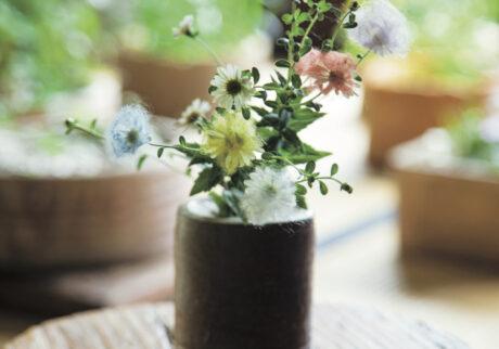可憐に咲く野菊に「着せ綿」を。