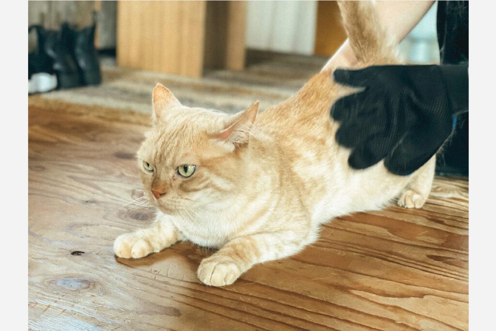 猫だって身だしなみを整えなきゃね
